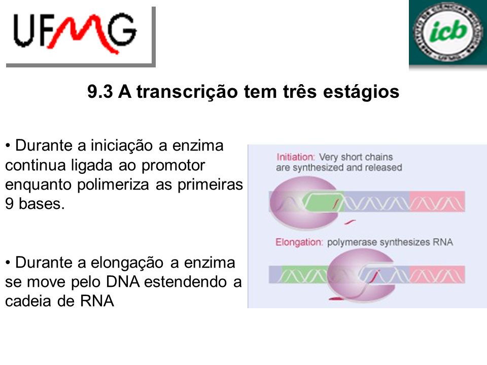 9.3 A transcrição tem três estágios