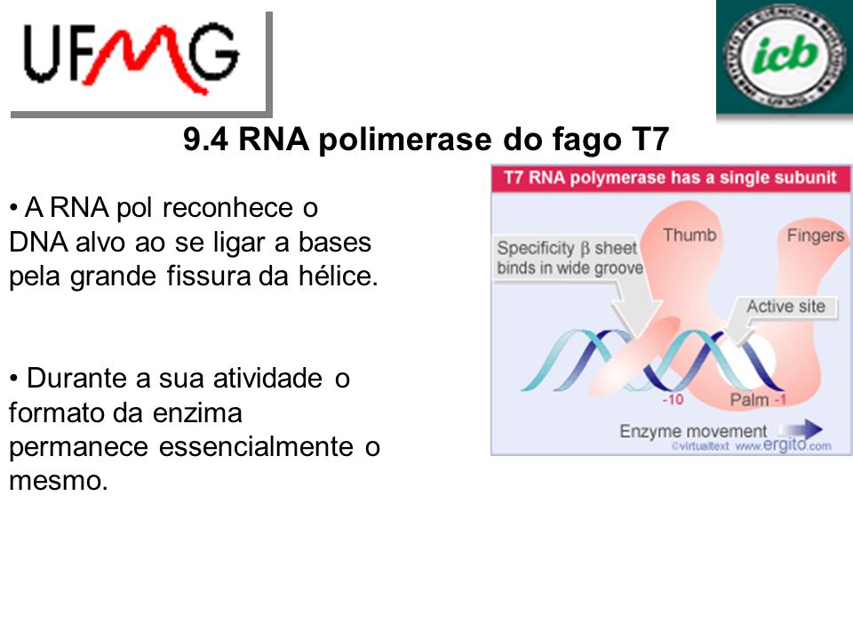 9.4 RNA polimerase do fago T7