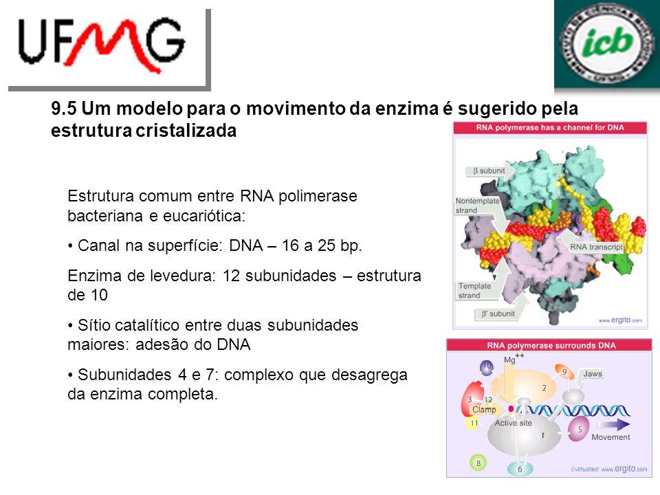 9.5 Um modelo para o movimento da enzima é sugerido pela estrutura cristalizada