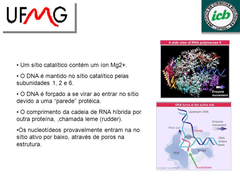 Um sítio catalítico contém um íon Mg2+.