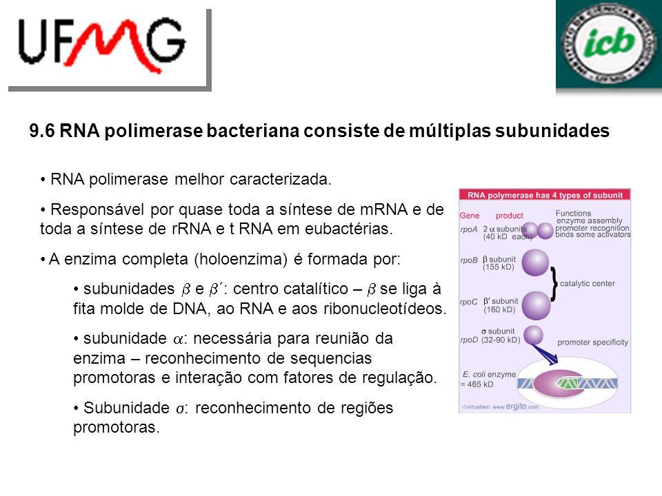 9.6 RNA polimerase bacteriana consiste de múltiplas subunidades