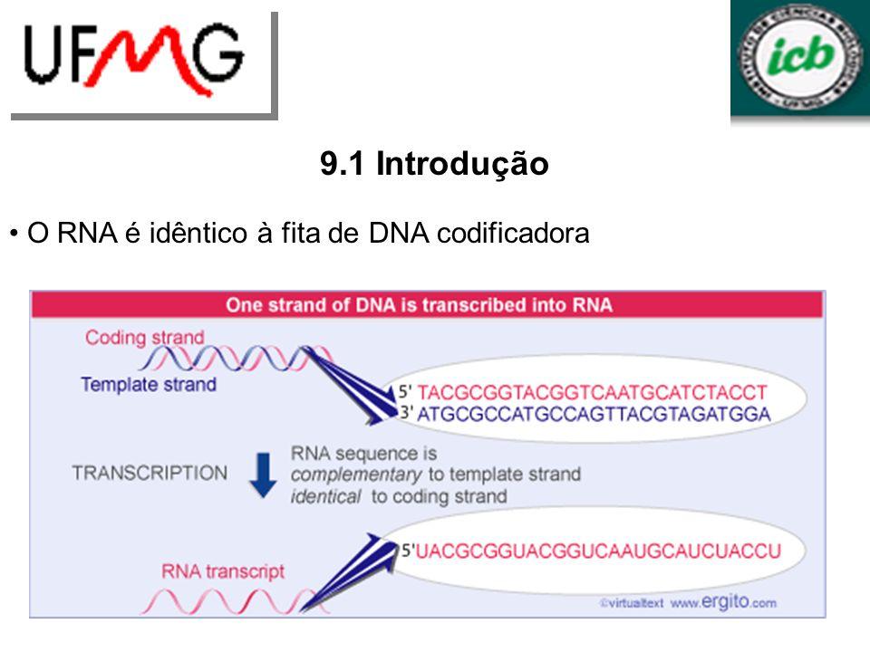 9.1 Introdução O RNA é idêntico à fita de DNA codificadora LGCM URLGA