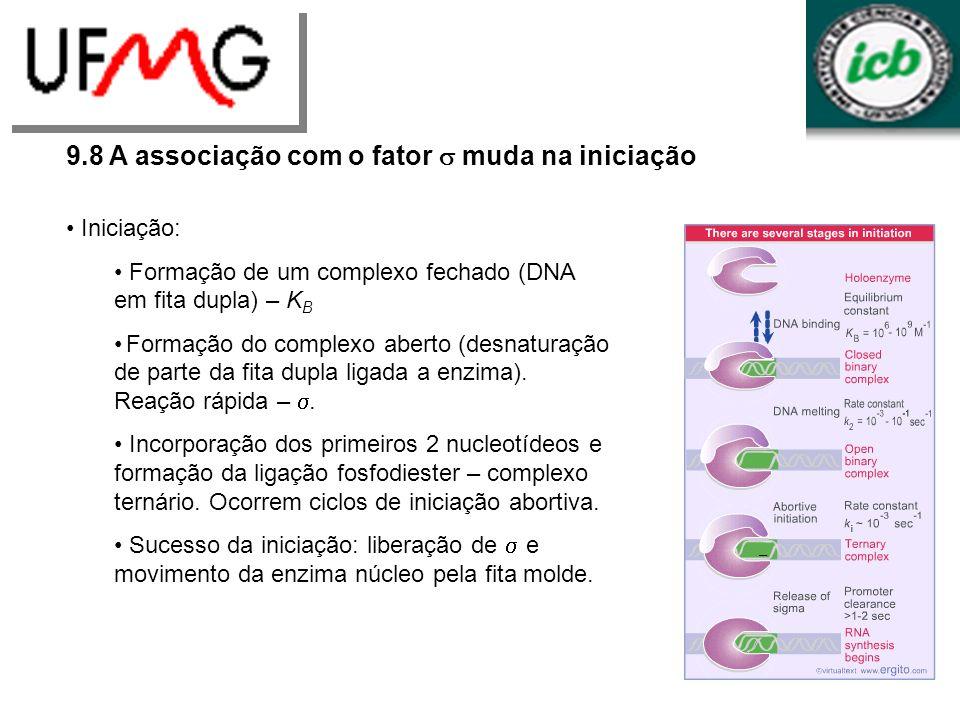 9.8 A associação com o fator s muda na iniciação