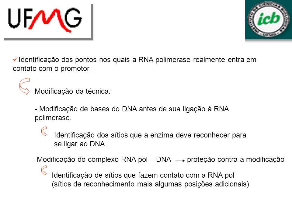 Identificação dos pontos nos quais a RNA polimerase realmente entra em contato com o promotor