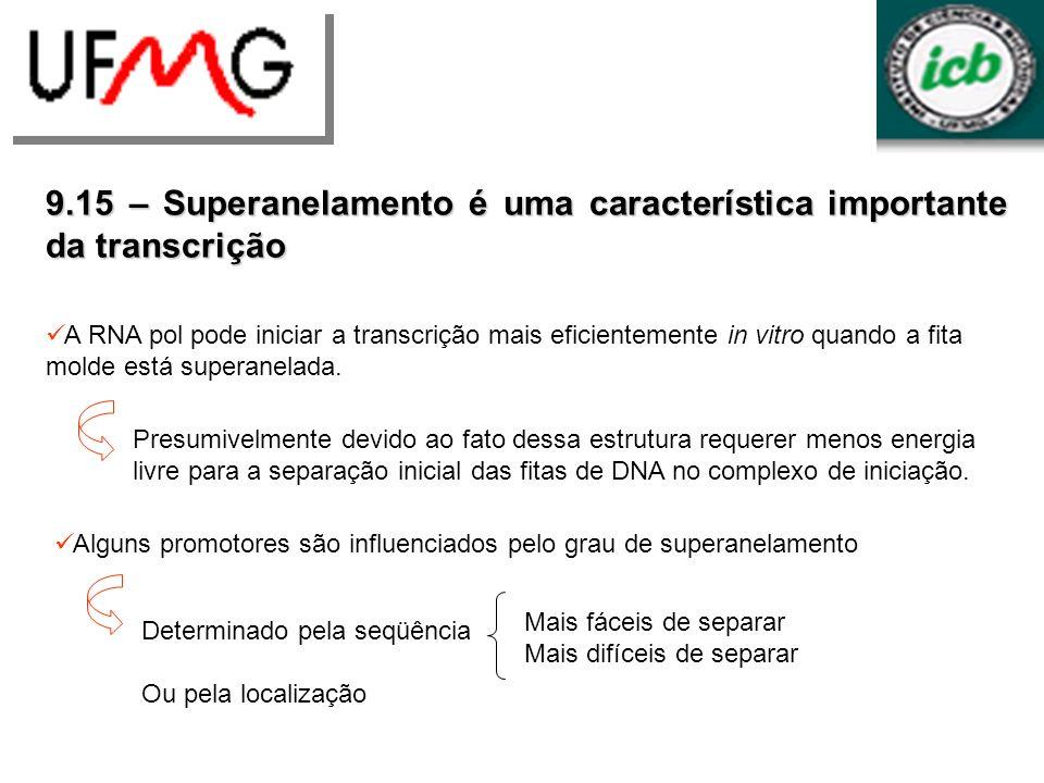 9.15 – Superanelamento é uma característica importante da transcrição