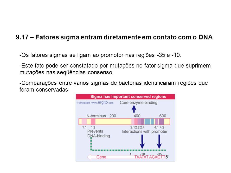 9.17 – Fatores sigma entram diretamente em contato com o DNA