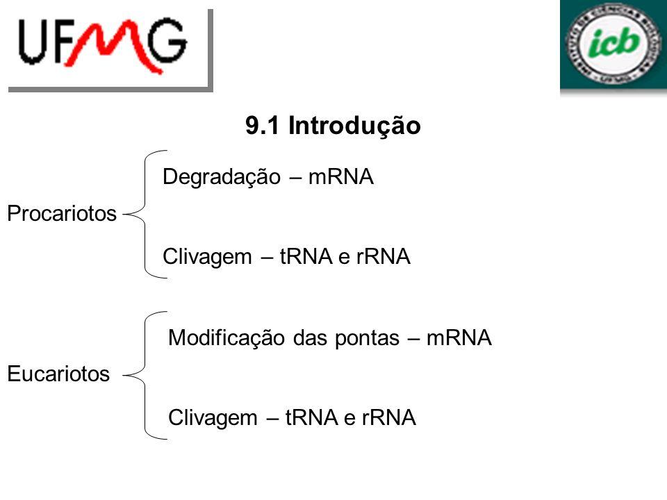 LGCM URLGA 9.1 Introdução Degradação – mRNA Clivagem – tRNA e rRNA