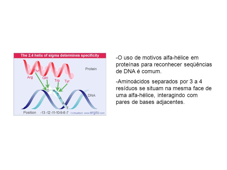 O uso de motivos alfa-hélice em proteínas para reconhecer seqüências de DNA é comum.