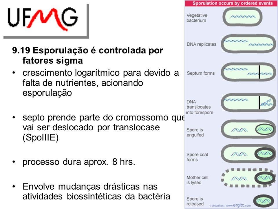 9.19 Esporulação é controlada por fatores sigma