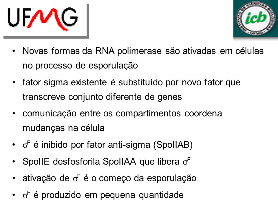 Novas formas da RNA polimerase são ativadas em células no processo de esporulação