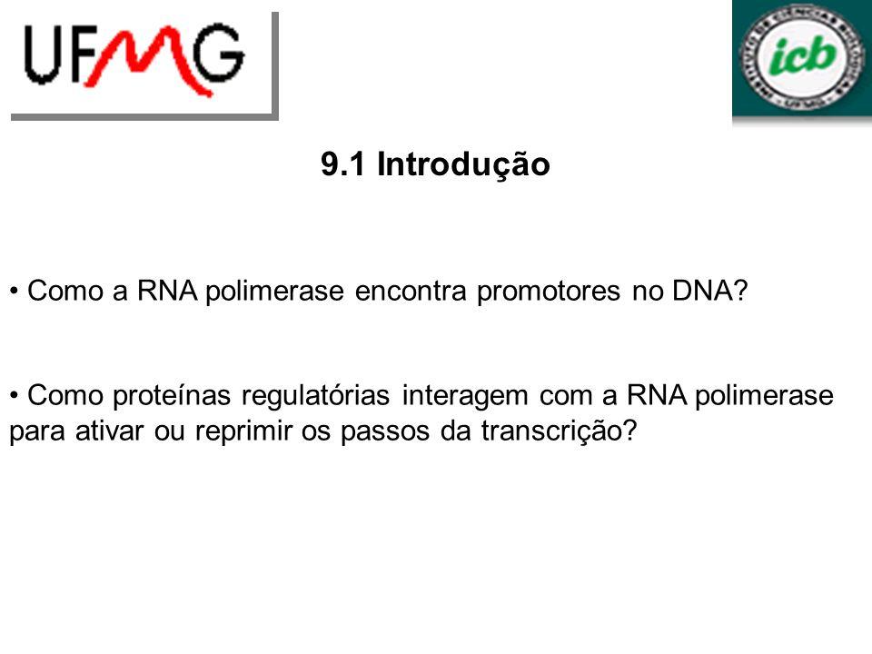 URLGA 9.1 Introdução Como a RNA polimerase encontra promotores no DNA