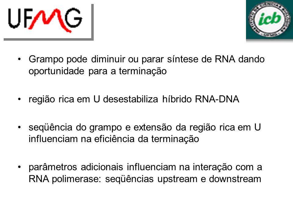 Grampo pode diminuir ou parar síntese de RNA dando oportunidade para a terminação