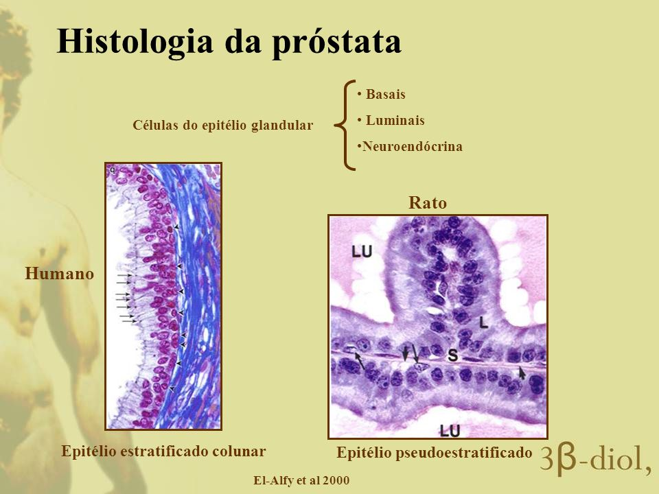 Células do epitélio glandular