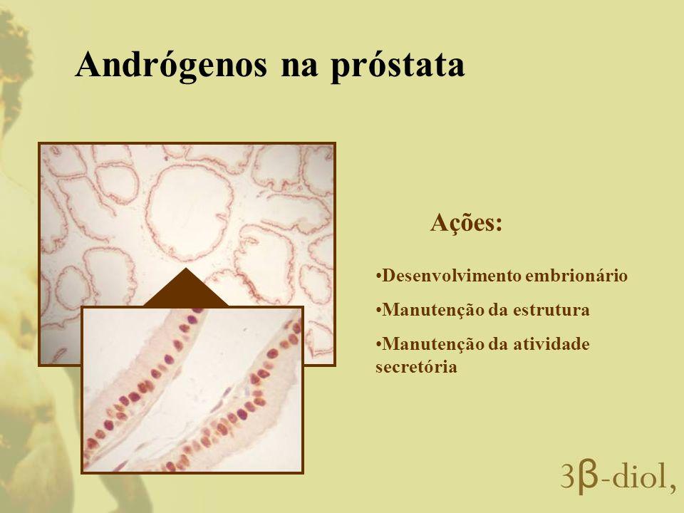 Andrógenos na próstata