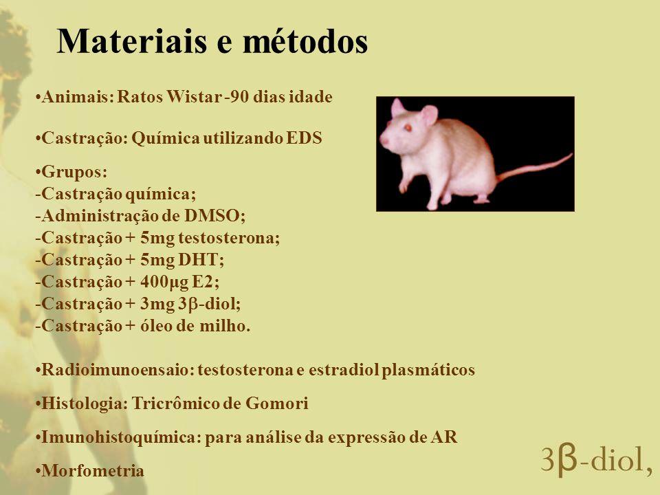 Materiais e métodos Animais: Ratos Wistar -90 dias idade