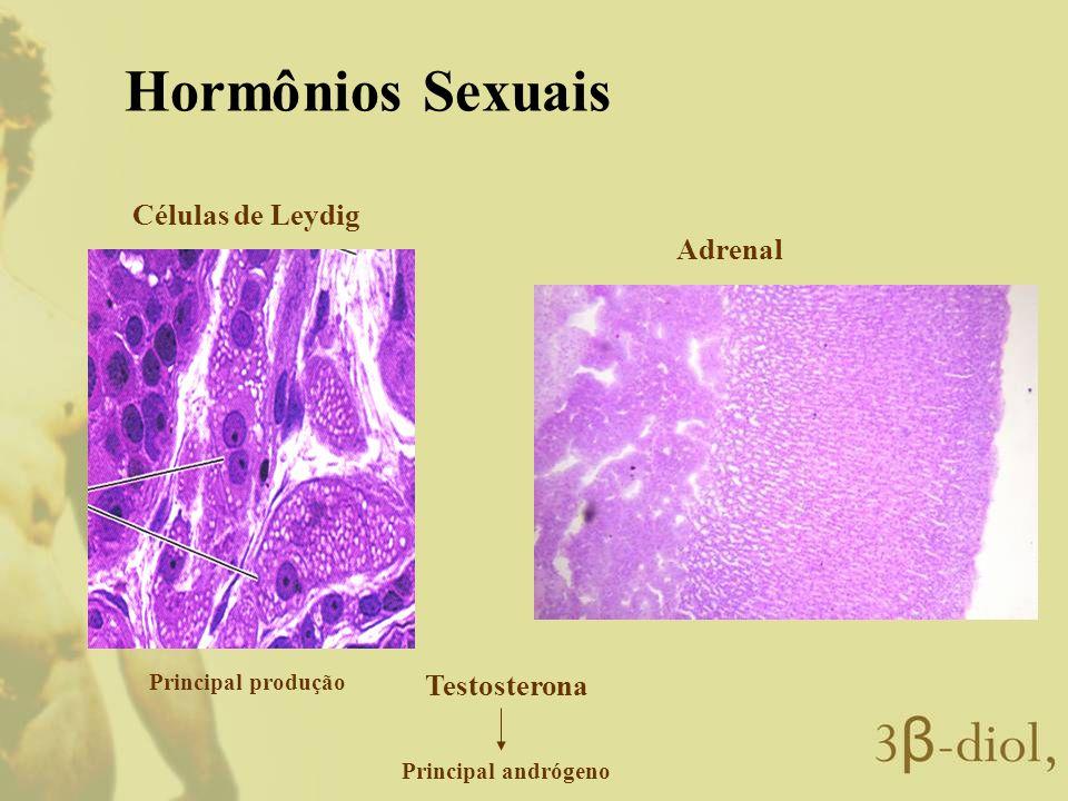 Hormônios Sexuais Células de Leydig Adrenal Testosterona
