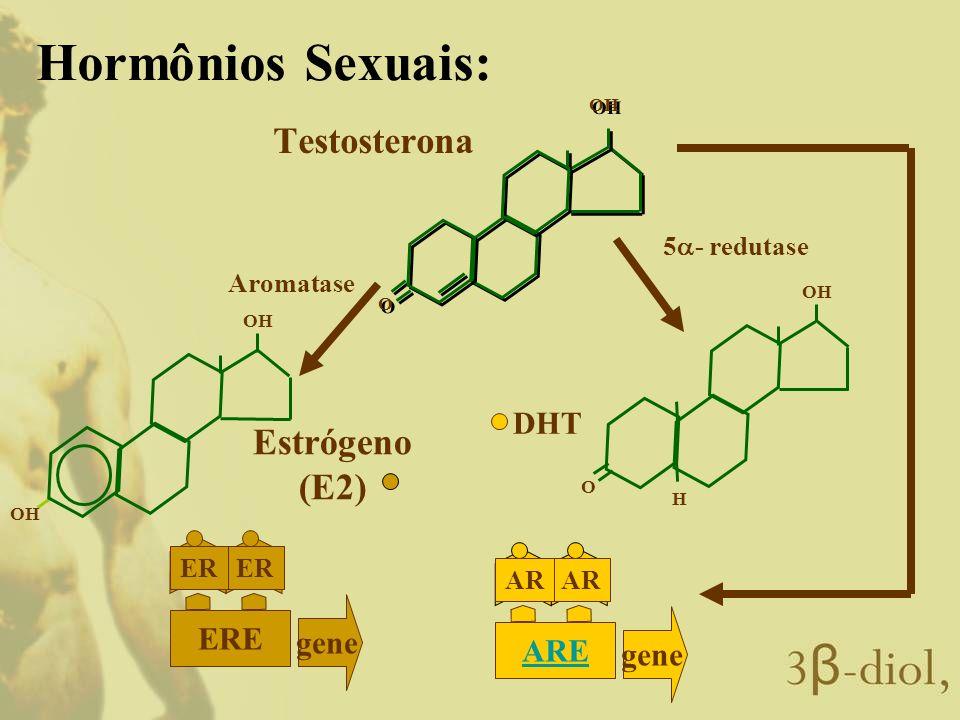 Hormônios Sexuais: Testosterona Estrógeno (E2) DHT gene ERE gene ARE