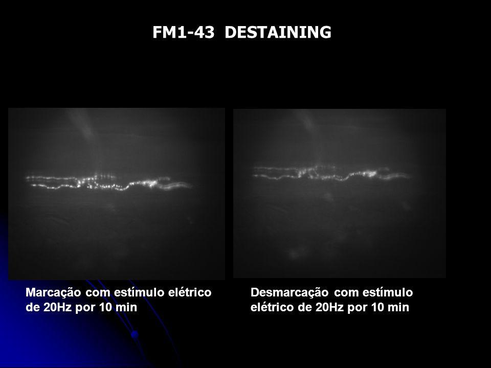 FM1-43 DESTAINING Marcação com estímulo elétrico de 20Hz por 10 min