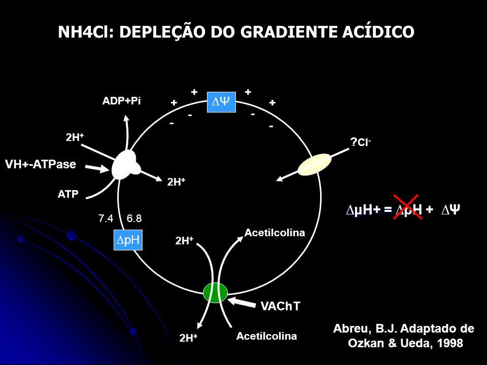 NH4Cl: DEPLEÇÃO DO GRADIENTE ACÍDICO