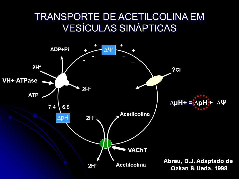 TRANSPORTE DE ACETILCOLINA EM VESÍCULAS SINÁPTICAS