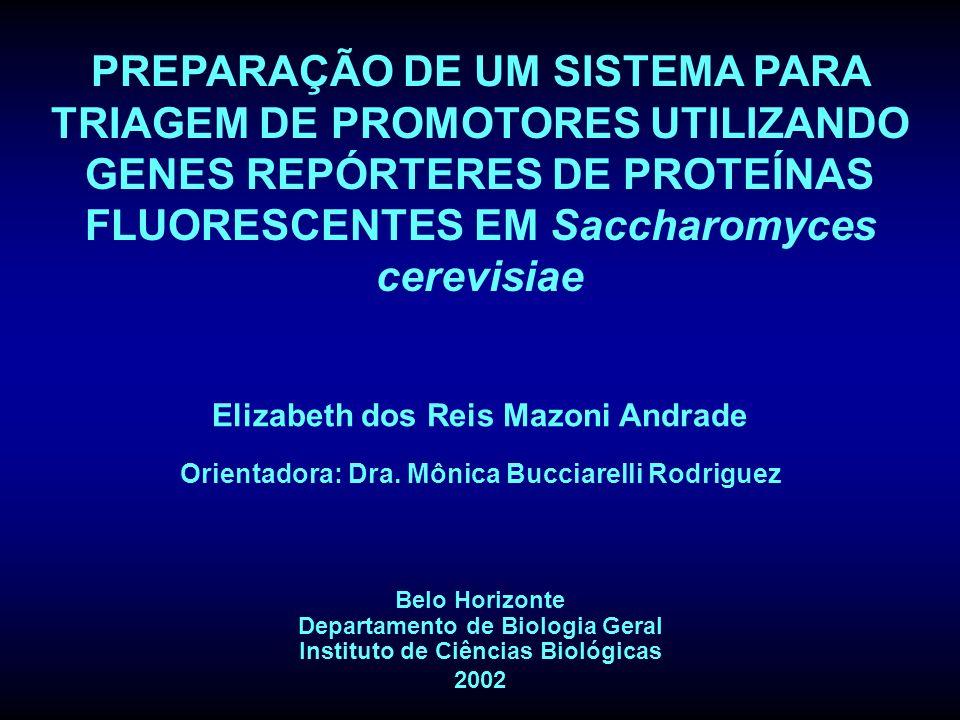 PREPARAÇÃO DE UM SISTEMA PARA TRIAGEM DE PROMOTORES UTILIZANDO GENES REPÓRTERES DE PROTEÍNAS FLUORESCENTES EM Saccharomyces cerevisiae