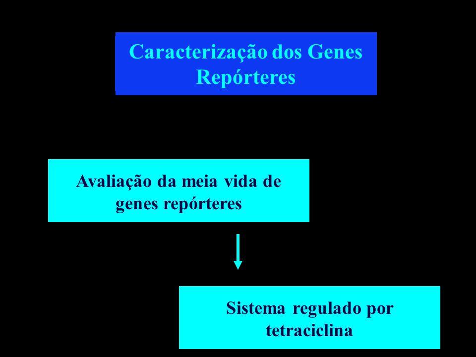 Caracterização dos Genes Repórteres