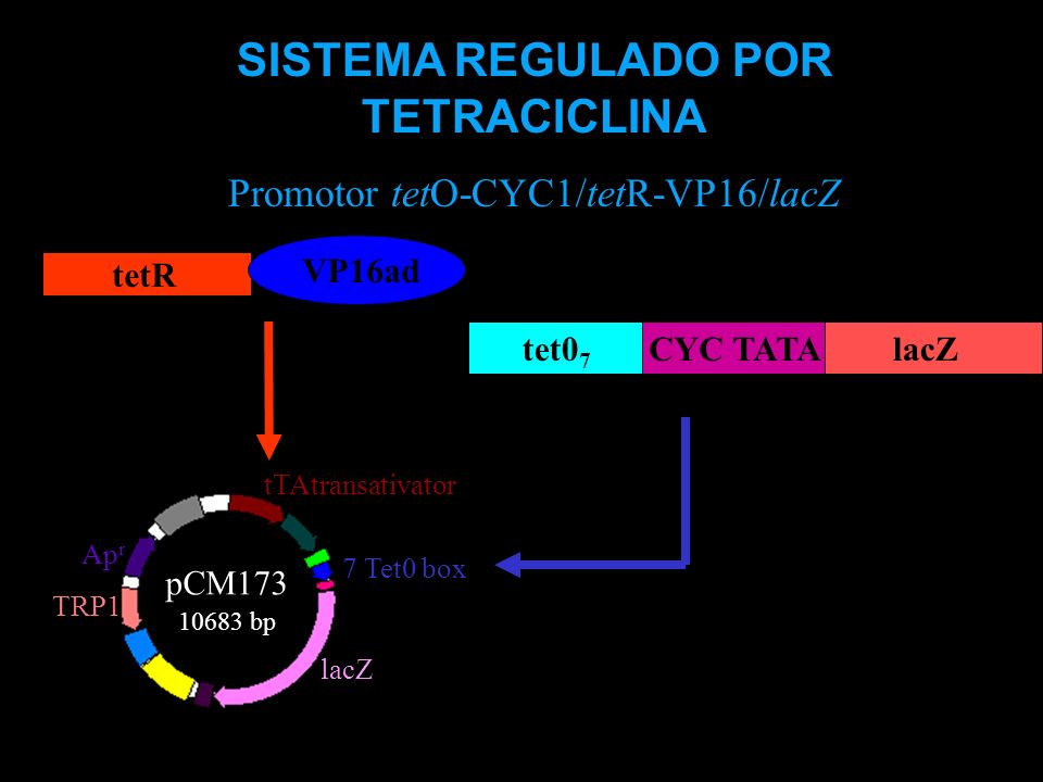 SISTEMA REGULADO POR TETRACICLINA