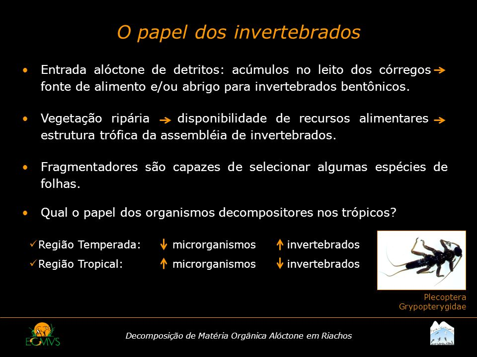 O papel dos invertebrados