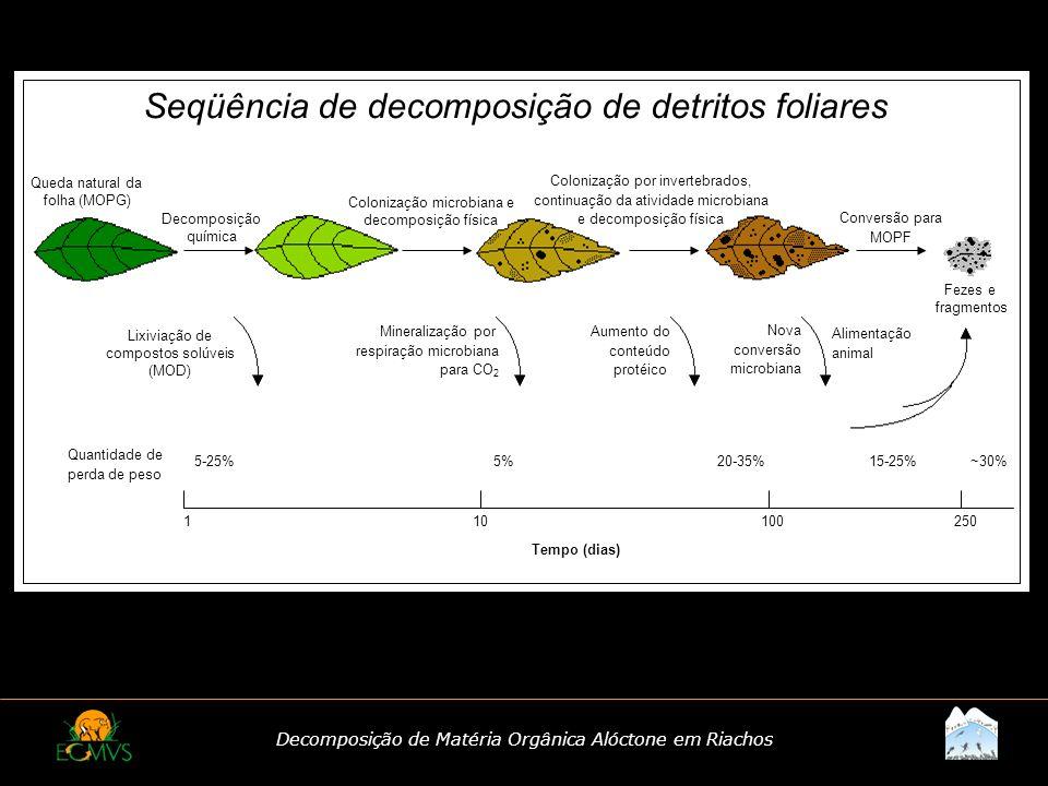 Seqüência de decomposição de detritos foliares