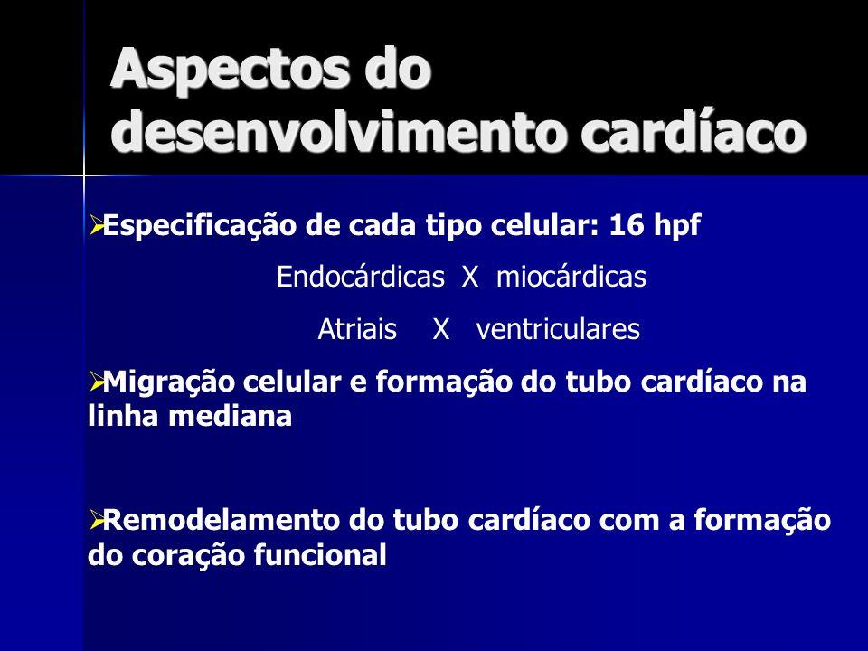 Aspectos do desenvolvimento cardíaco