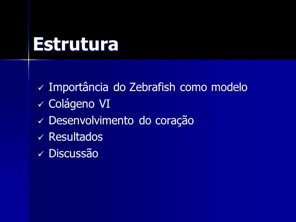 Estrutura Importância do Zebrafish como modelo Colágeno VI