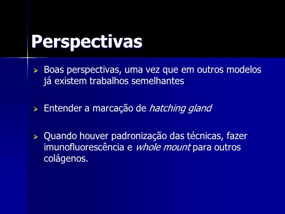 Perspectivas Boas perspectivas, uma vez que em outros modelos já existem trabalhos semelhantes. Entender a marcação de hatching gland.