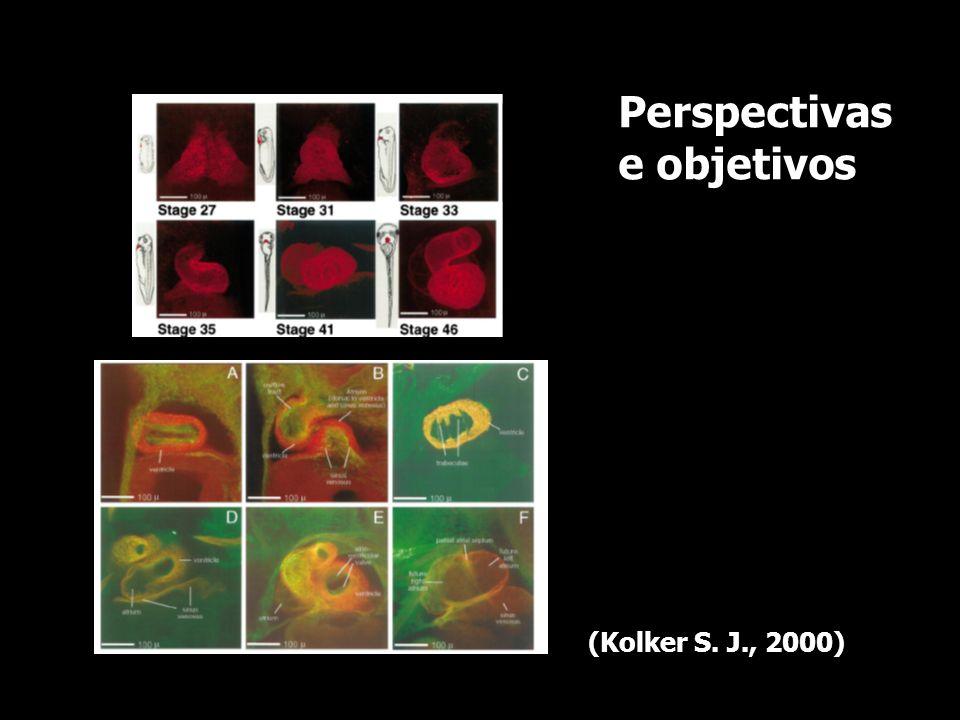 Perspectivas e objetivos