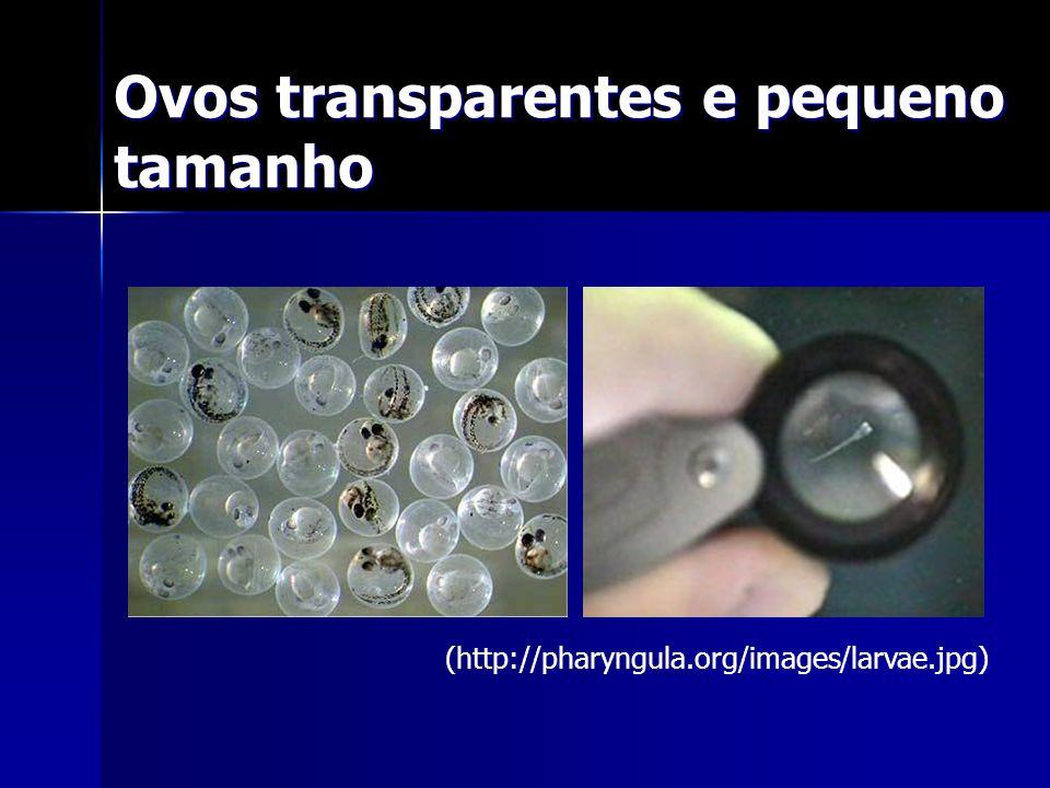 Ovos transparentes e pequeno tamanho