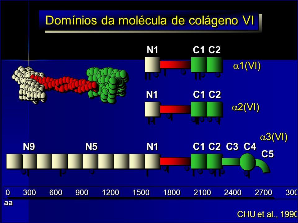 Domínios da molécula de colágeno VI
