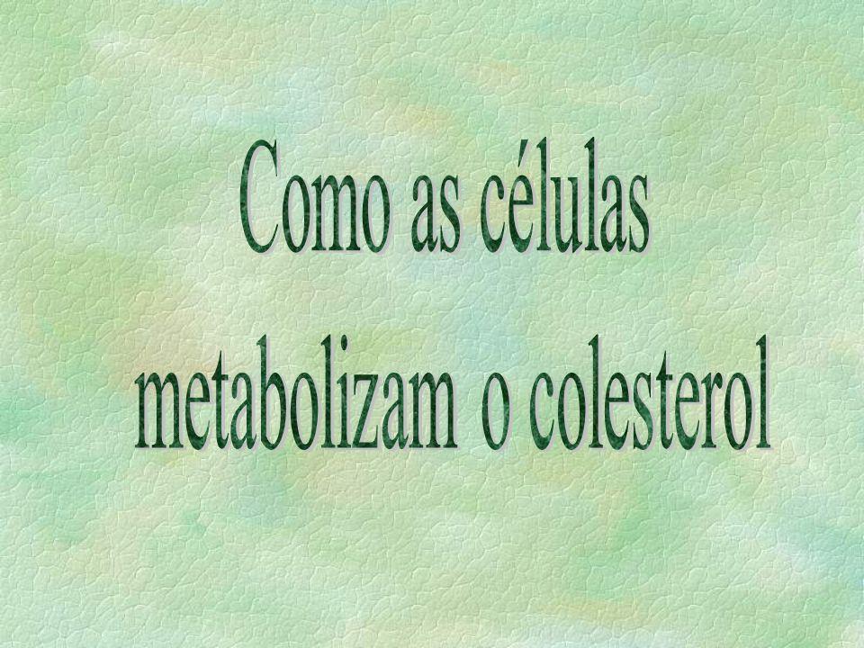 metabolizam o colesterol