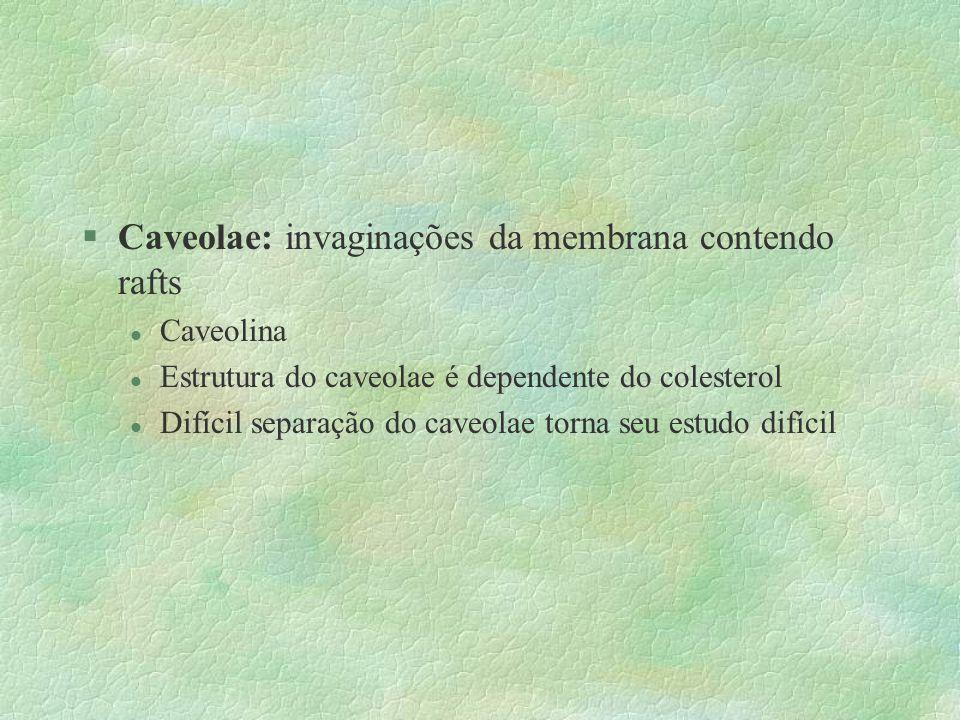 Caveolae: invaginações da membrana contendo rafts