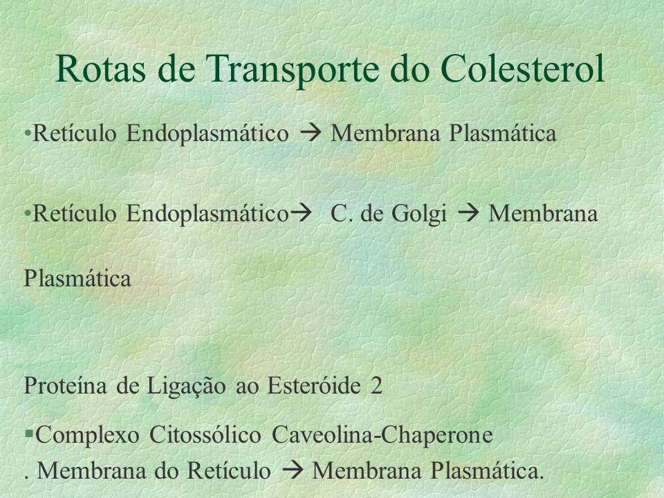 Rotas de Transporte do Colesterol