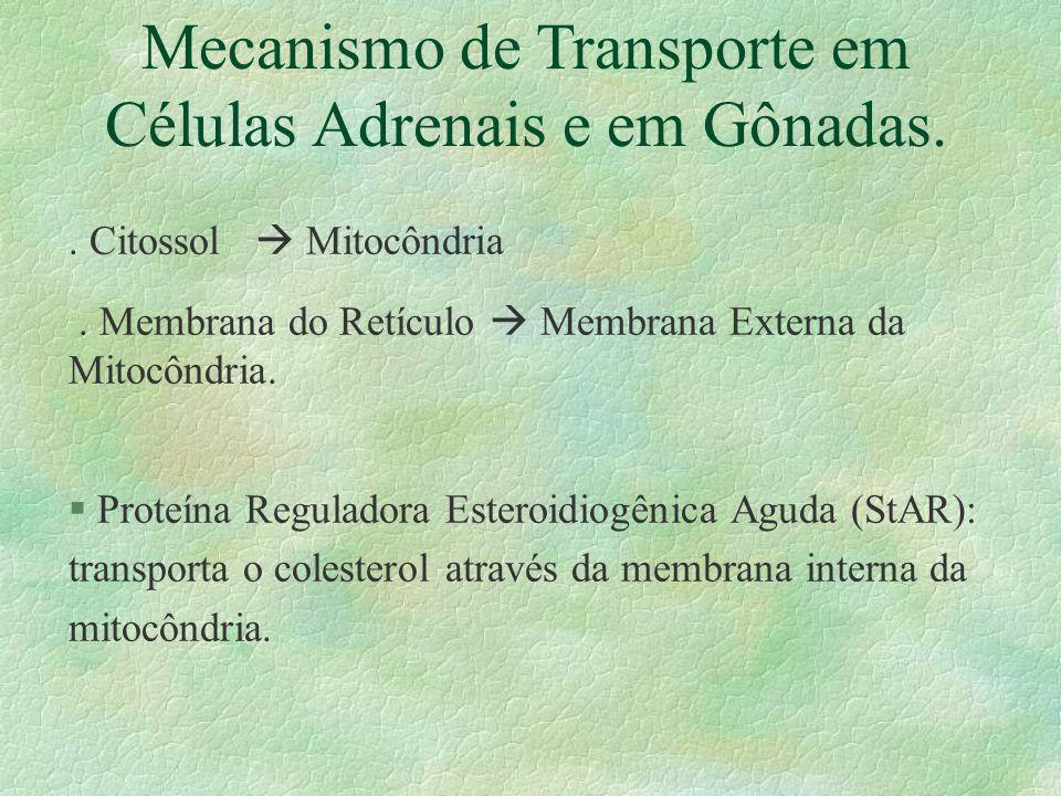 Mecanismo de Transporte em Células Adrenais e em Gônadas.