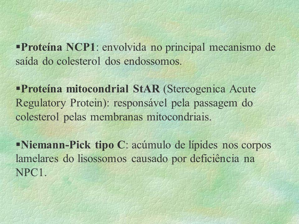 Proteína NCP1: envolvida no principal mecanismo de saída do colesterol dos endossomos.