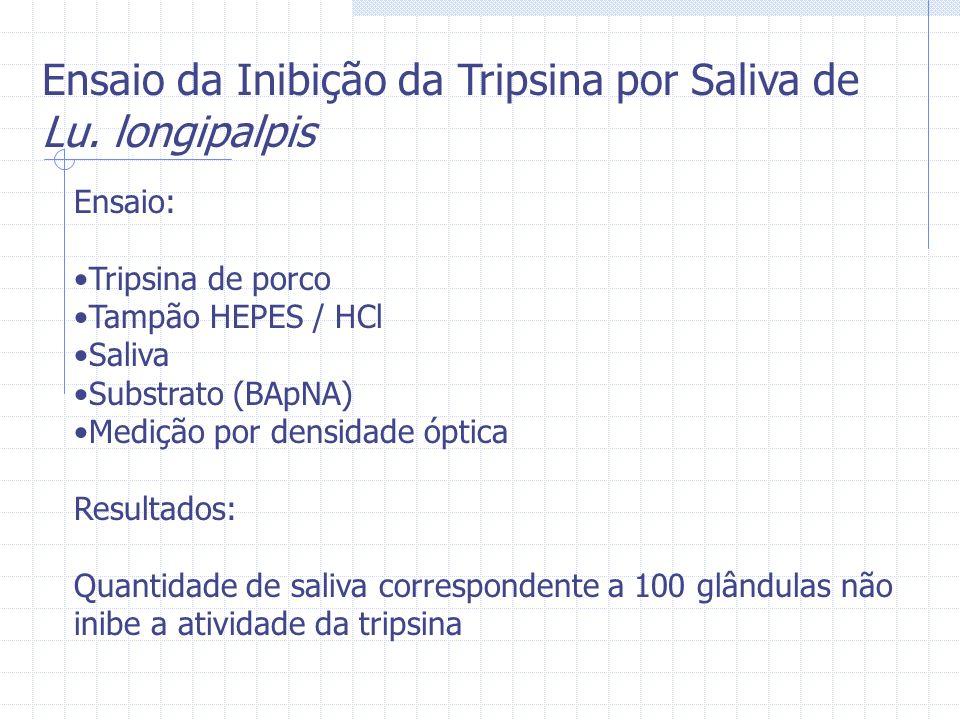 Ensaio da Inibição da Tripsina por Saliva de Lu. longipalpis