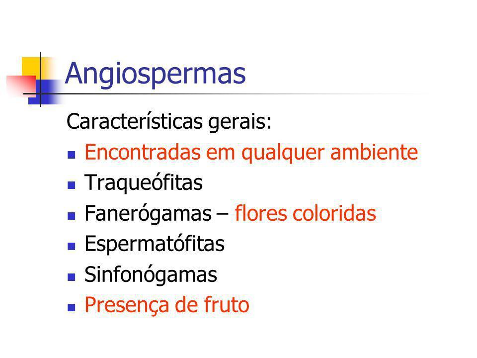 Angiospermas Características gerais: Encontradas em qualquer ambiente