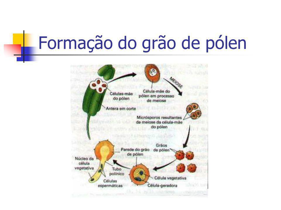 Formação do grão de pólen