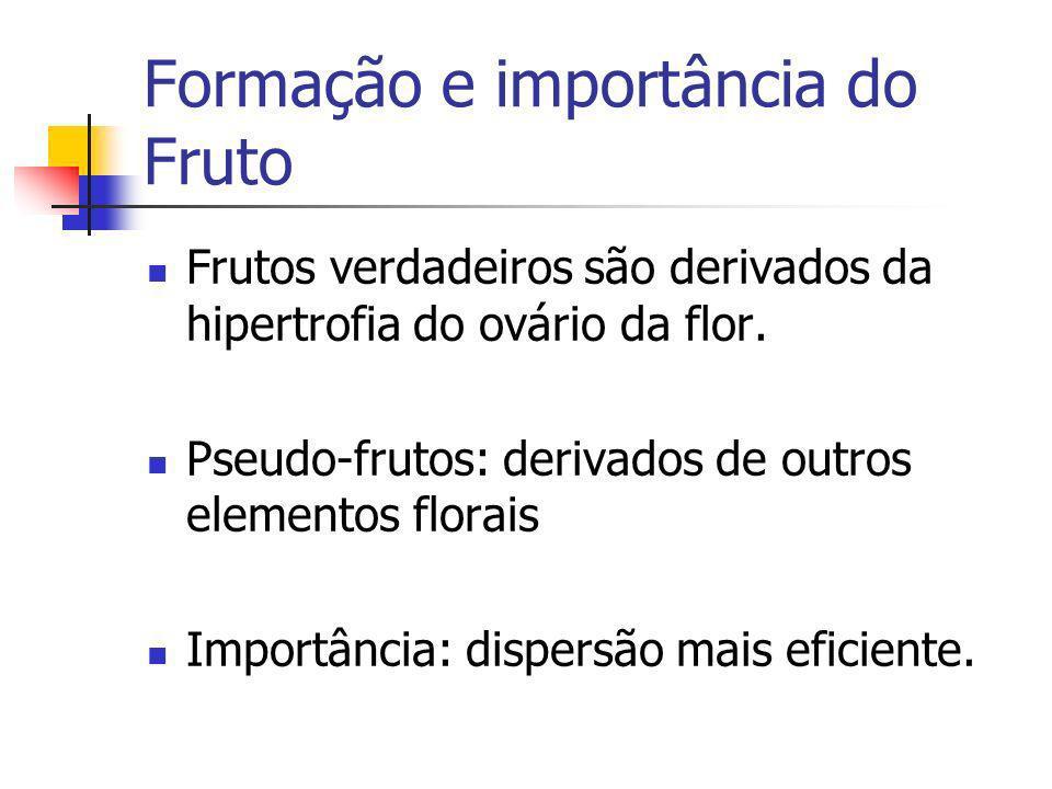 Formação e importância do Fruto
