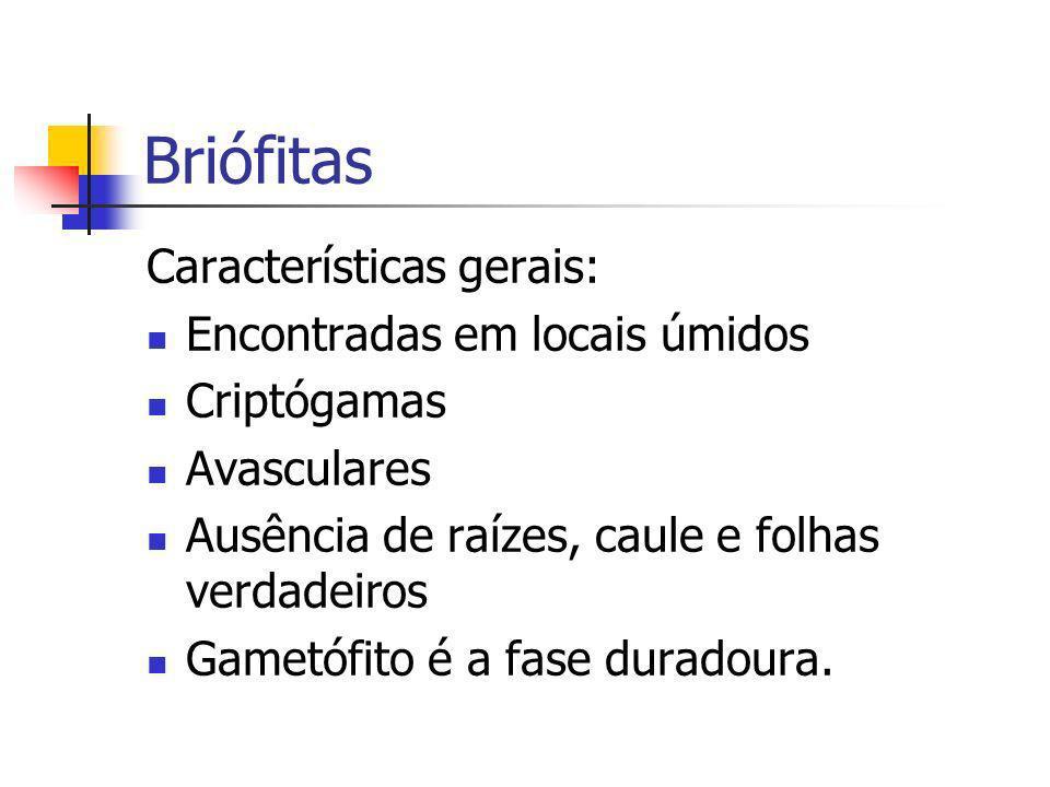 Briófitas Características gerais: Encontradas em locais úmidos