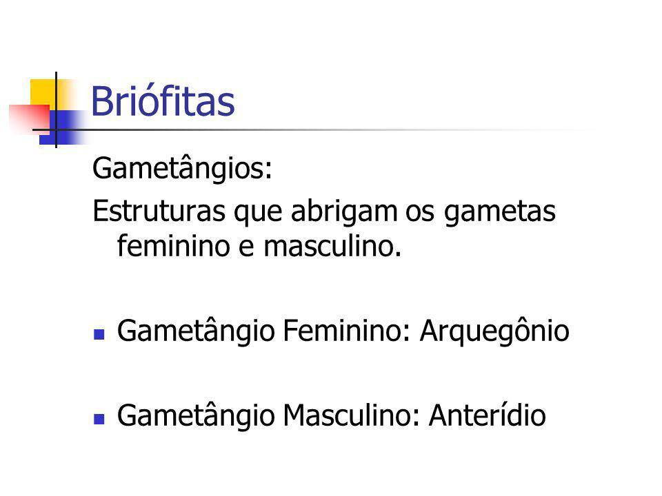 Briófitas Gametângios: