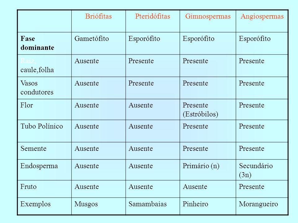 BriófitasPteridófitas. Gimnospermas. Angiospermas. Fase dominante. Gametófito. Esporófito. Raiz, caule,folha.