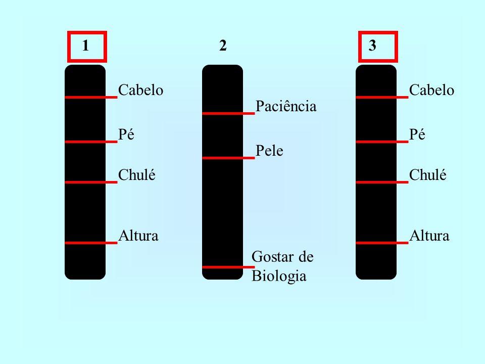 1 2 3 Cabelo Cabelo Paciência Pé Pé Pele Chulé Chulé Altura Altura Gostar de Biologia