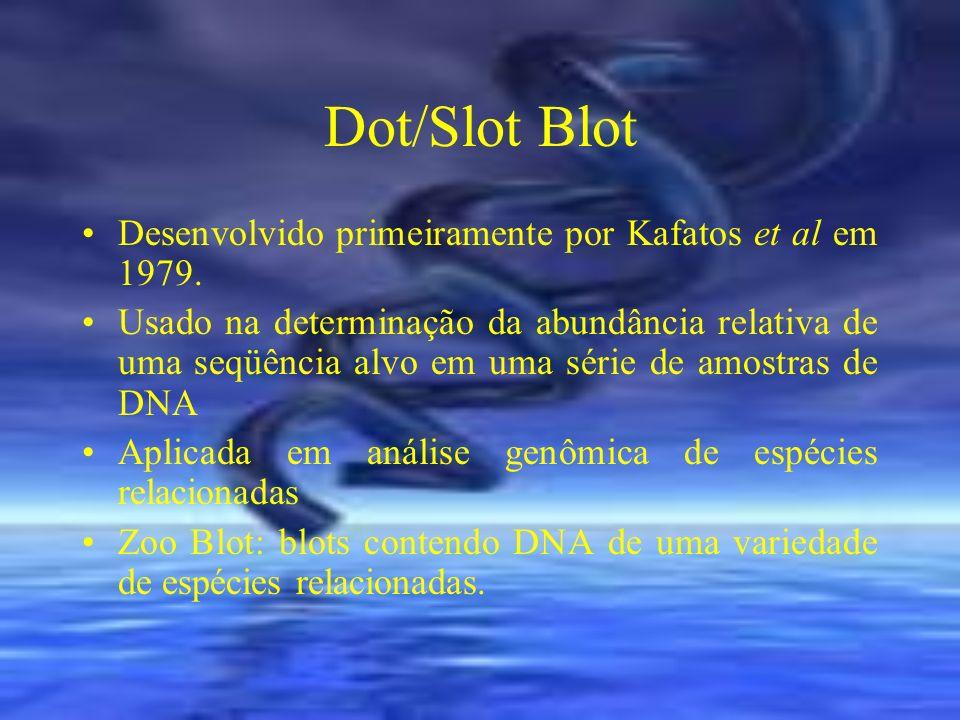 Dot/Slot Blot Desenvolvido primeiramente por Kafatos et al em 1979.