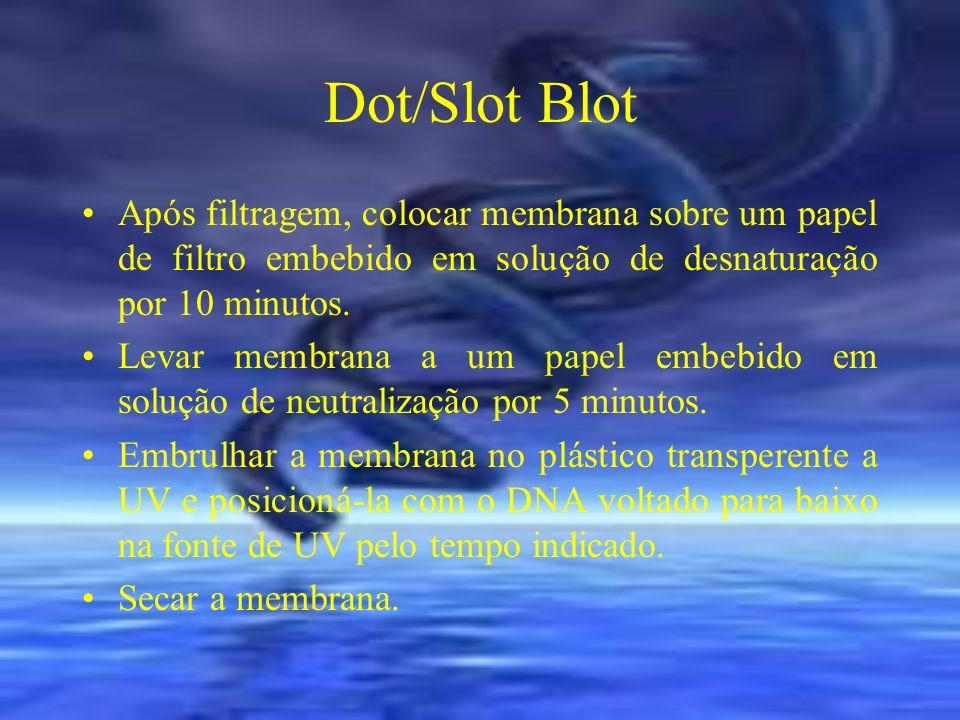 Dot/Slot Blot Após filtragem, colocar membrana sobre um papel de filtro embebido em solução de desnaturação por 10 minutos.